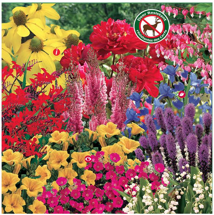 www.iamcalgary.ca IAmCalgary It's Spring and gardening Costco Bulb Deer Resistant