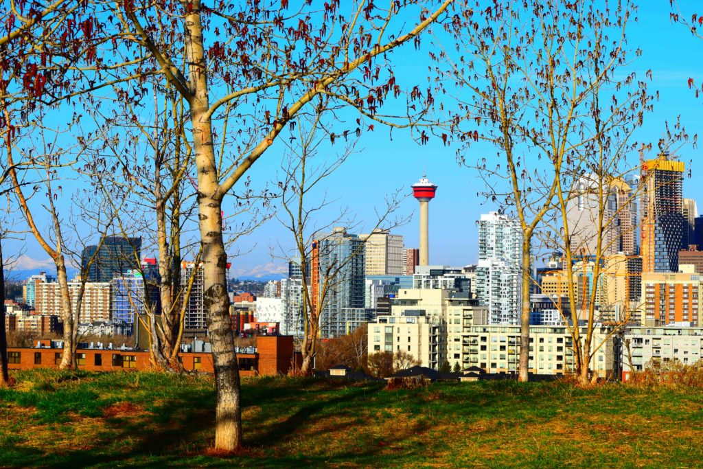 www.iamcalgary.ca IAmCalgary Tom Campbell Hill Natural Park Tower through the trees