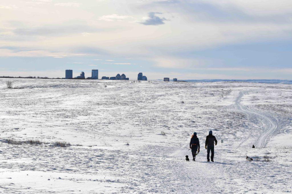 iamcalgary.ca Nose Hill Dog Walk Off-leash Winter