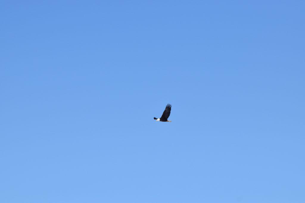 www.IAmCalgary.ca I Am Calgary Ice Fishing Chain Lakes Bald Eagle