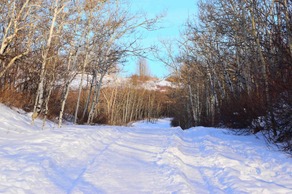www.iamcalgary.ca IAmCalgary I Am Calgary 20190310 Nose Hill Park Walk Porcupine
