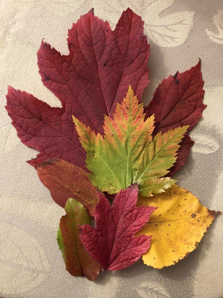www.iamcalgary.ca IAmCalgary Salmon Arm Thanksgiving Maple Leaves