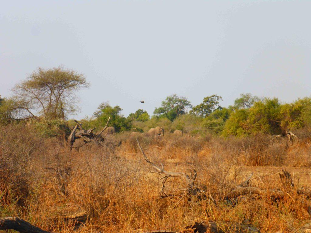 www.iamcalgary.ca IAmCalgary 2016 Cycle Mashatu Botswana Safari Elephant Herd
