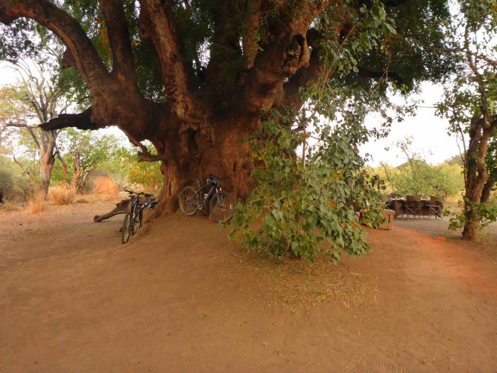 www.iamcalgary.ca IAmCalgary 2016 Cycle Mashatu Botswana Safari Camp