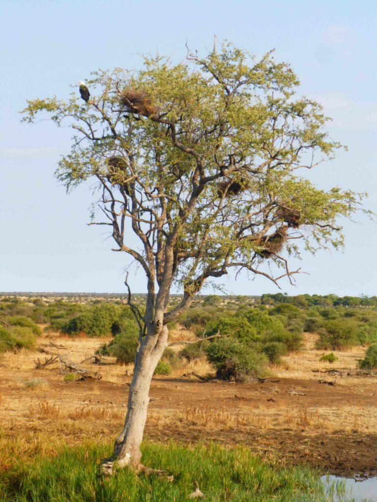 www.iamcalgary.ca IAmCalgary I Am Calgary Botswana Mashatu Cycle Fish Eagle