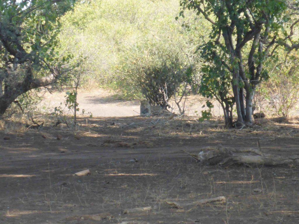 www.iamcalgary.ca IAmCalgary I Am Calgary Botswana Mashatu Cycle Leopard
