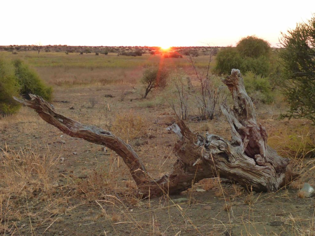 www.iamcalgary.ca IAmCalgary I Am Calgary Botswana Mashatu Cycle Tree Stump Sunset