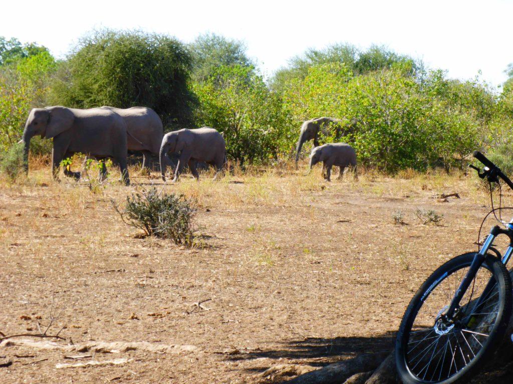 www.iamcalgary.ca IAmCalgary I Am Calgary Botswana Mashatu Cycle Elephant Picnic