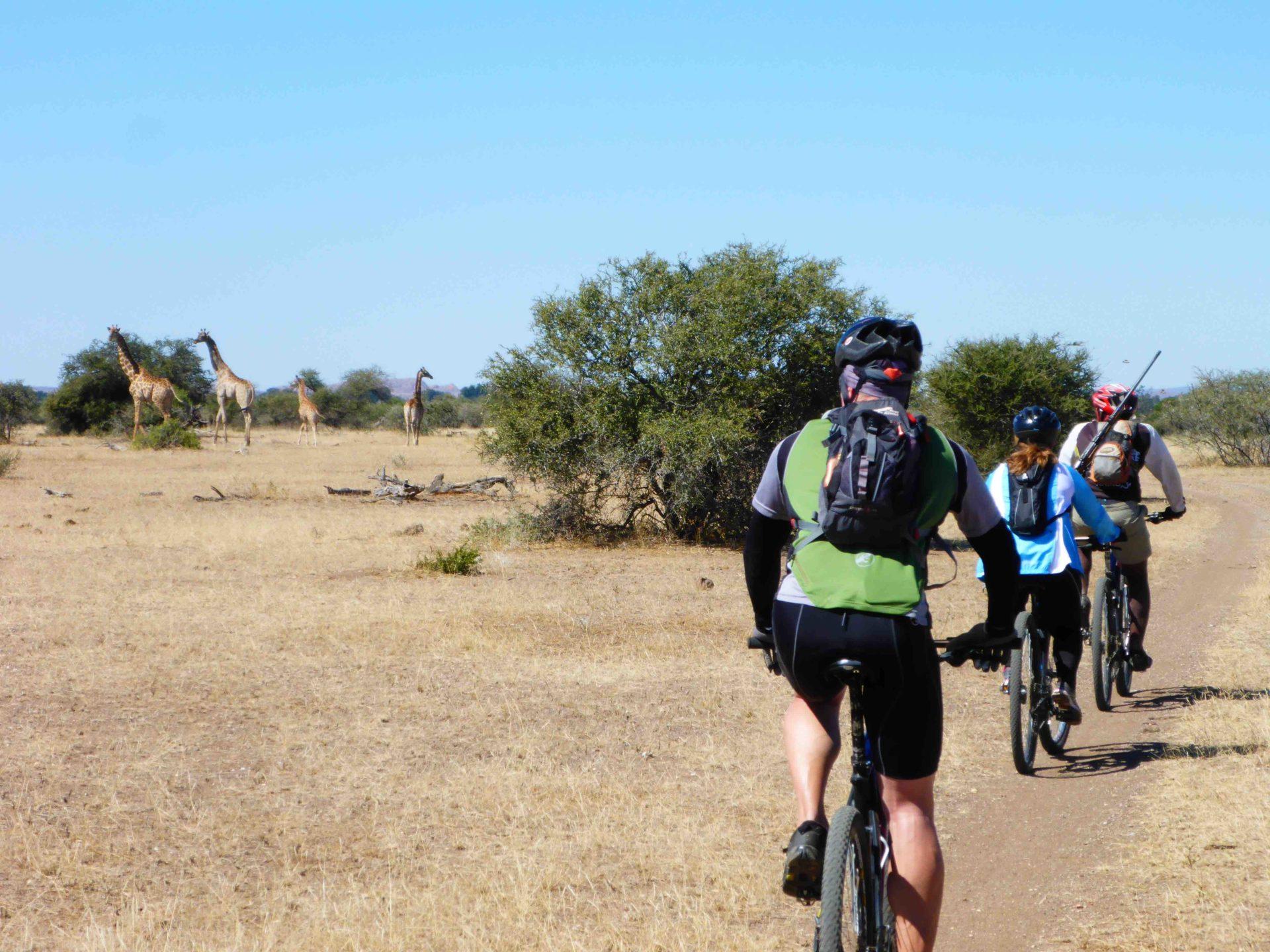 www.iamcalgary.ca IAmCalgary I Am Calgary Botswana Mashatu Cycle Giraffe