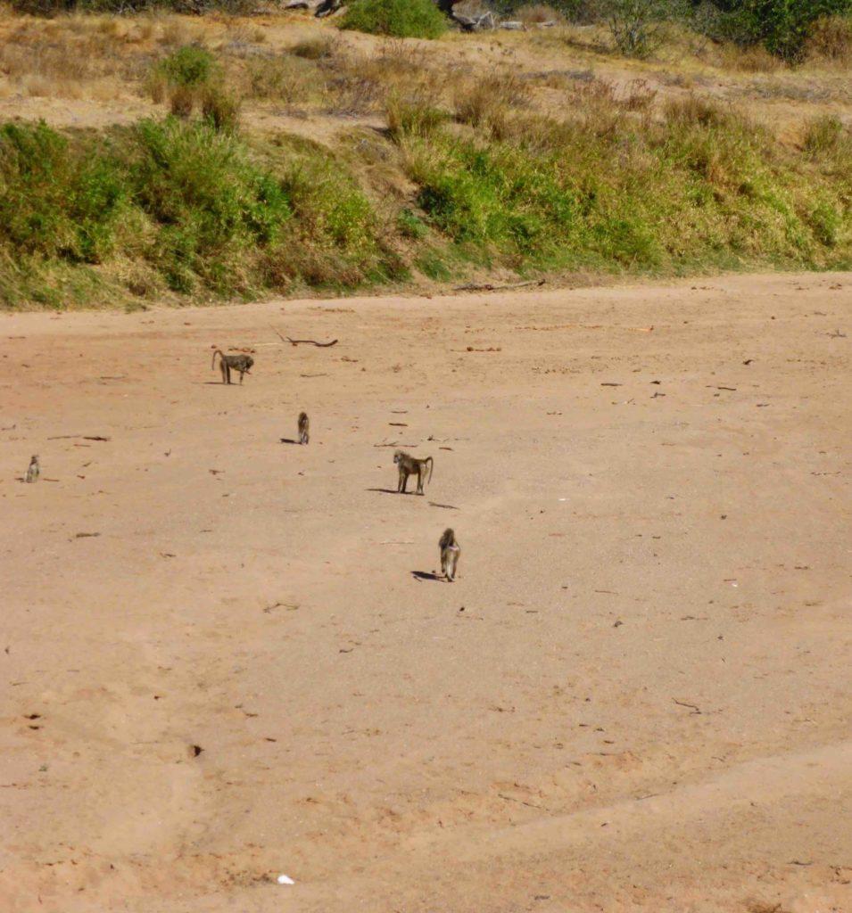 www.iamcalgary.ca IAmCalgary I Am Calgary Botswana Mashatu Cycle Babboons Limpopo