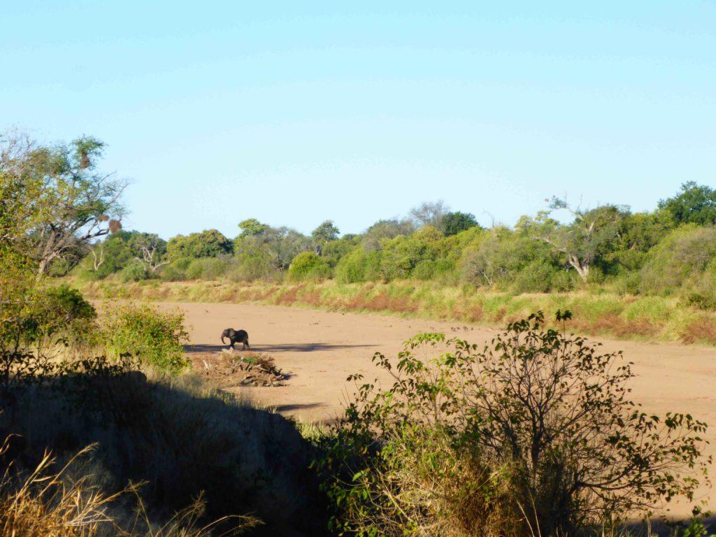 www.iamcalgary.ca IAmCalgary I Am Calgary Botswana Mashatu Cycle Elephant Limpopo