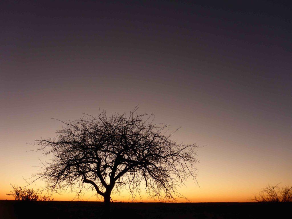 www.iamcalgary.ca IAmCalgary I Am Calgary Botswana Mashatu Cycle tree silhoutte