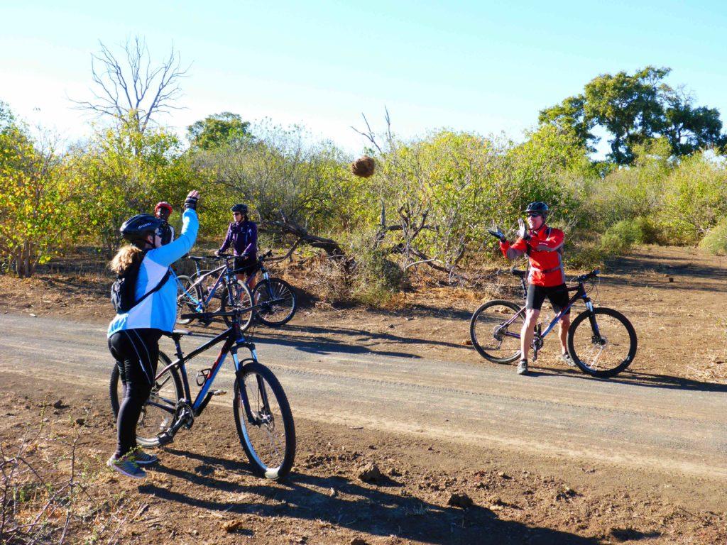 www.iamcalgary.ca IAmCalgary I Am Calgary Botswana Mashatu Cycle Flinging Dung